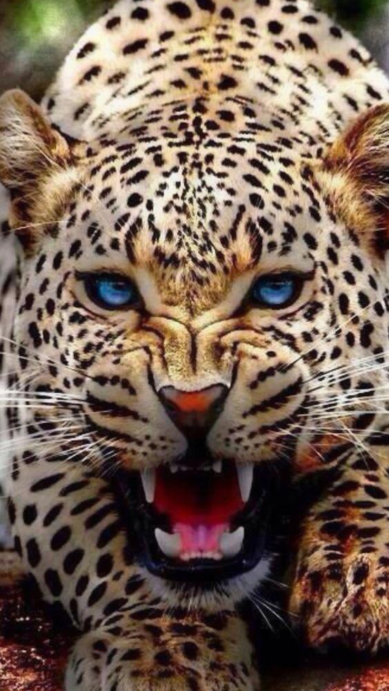 Leopard NEVER gets old
